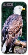 Beautiful Bald Eagle IPhone 6s Case by Jason Brow