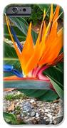 Bird Of Paradise IPhone 6s Case by Bruce Kessler