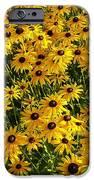 Black-eyed Susan IPhone 6s Case
