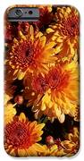 Blaze Of Flowers IPhone 6s Case by Kevin Croitz