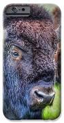 Buffalo Warrior IPhone 6s Case