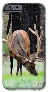 Bull Elk Grazing IPhone 6s Case by Carrie Putz