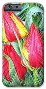 Burst Of Color IPhone 6s Case
