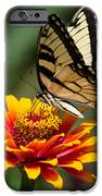 Butterfly Delight IPhone 6s Case