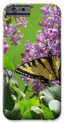 Butterfly On Lilac IPhone 6s Case by Diane Mitchell