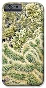 Cactus  IPhone 6s Case by Merrick Imagery