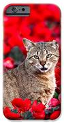 Cat In Red IPhone 6s Case