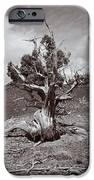 Cedar Landscape IPhone 6s Case by Roger Snyder