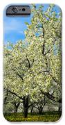 Cherry Blossoms IPhone 6s Case by Thomas Pettengill
