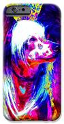 Chinese Crested Dog 20130125v1 IPhone Case by Wingsdomain Art and Photography