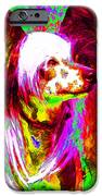 Chinese Crested Dog 20130125v2 IPhone Case by Wingsdomain Art and Photography