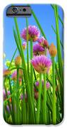 Chive Flowers And Buds IPhone 6s Case