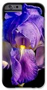 Cirrus Beauty 3 IPhone 6s Case