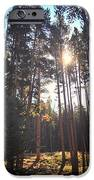 Colorado Pines IPhone 6s Case by Garren Zanker