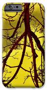 Colorful Branches IPhone 6s Case by Michael Sokalski