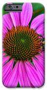 Cone Flower An Bumble  IPhone 6s Case by Brittany Perez