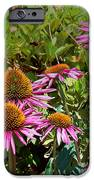Coneflowers IPhone 6s Case by Annette Allman