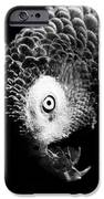 Congo African Grey 6 IPhone 6s Case by Paulina Szajek