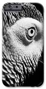 Congo African Grey 8 IPhone 6s Case by Paulina Szajek
