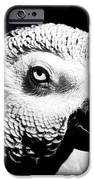 Congo African Grey Head Shot IPhone 6s Case