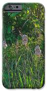 Cotton Monkey Heads IPhone 6s Case by Peter Jackson
