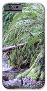 Creek Running Through The Forest IPhone 6s Case by Donald Torgerson