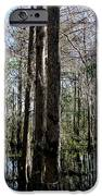 Cypress Trees IPhone 6s Case