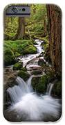 Deep In The Forest IPhone 6s Case by Pamela Winders