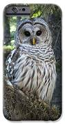 Encounter With An Owl IPhone 6s Case by Heike Ward