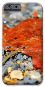 Fall Road IPhone 6s Case by Candice Trimble