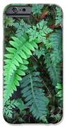 Ferns Along The Columbia River IPhone 6s Case