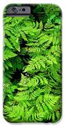 Ferns And Fauna IPhone 6s Case by T C Brown