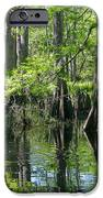 Fisheating Creek IPhone 6s Case