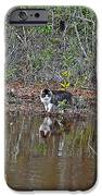 Fishing Feline IPhone Case by Al Powell Photography USA