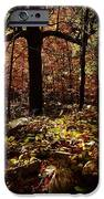 Forest Illuminated IPhone Case by Linda Unger