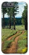 Forest Path IPhone 6s Case by Carrie Putz
