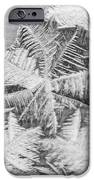 Frost In Black And White IPhone 6s Case by Dana Moyer