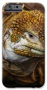 Galapagos Land Iguana  IPhone 6s Case by Allen Sheffield