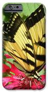 Gathering Nectar IPhone 6s Case