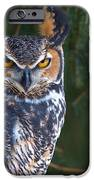 Great Horned Owl IPhone 6s Case by Mike Mulick