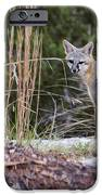 Grey Fox At Rest IPhone 6s Case