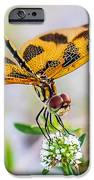 Halloween Banner Dragonfly IPhone 6s Case
