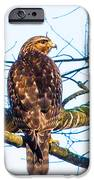 Hawk Love IPhone 6s Case by Jinx Farmer