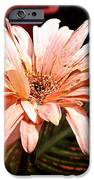He Loves Me He Loves Me Not IPhone 6s Case by Valeria Donaldson