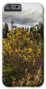 Heather Meadow IPhone 6s Case by Blanca Braun