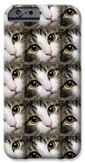 Here Kitty Kitty Close Up 25 IPhone 6s Case by Andee Design