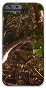 Heron IPhone 6s Case