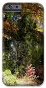 Hidden And Forgotten  IPhone 6s Case by Kim Galluzzo Wozniak