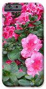 In A Blaze Of Color_2 IPhone 6s Case