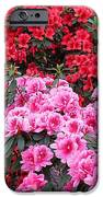 In A Blaze Of Color_3 IPhone 6s Case by Halyna  Yarova